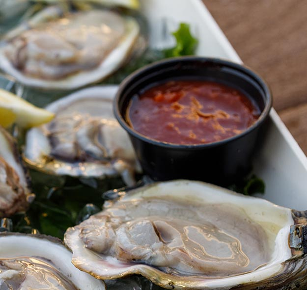 Oysters at Shucker's