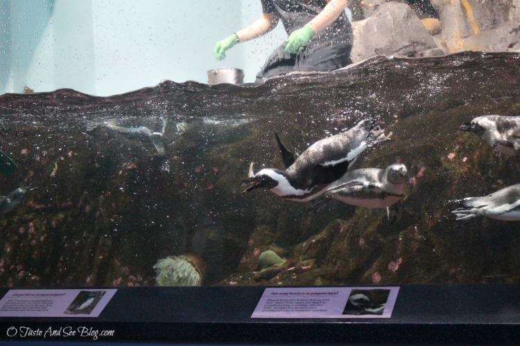 Monterey Bay Aquarium #hosted