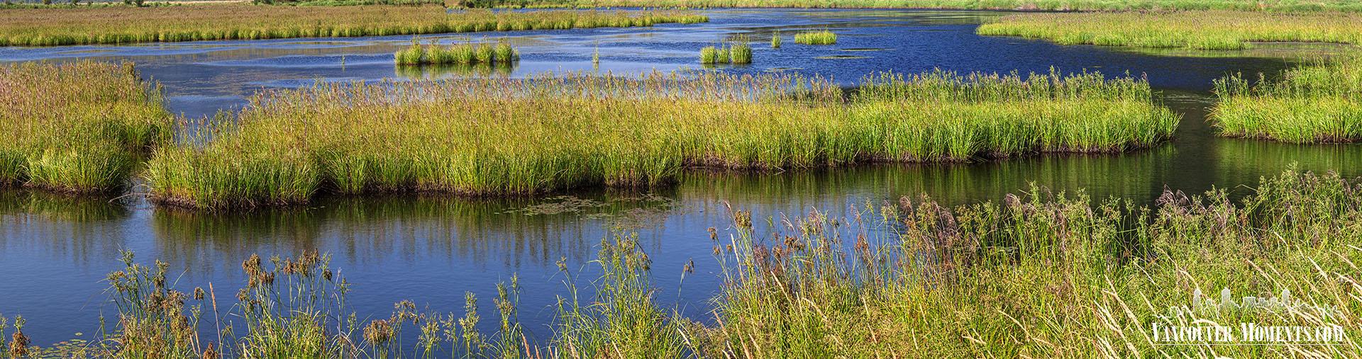 Marshlands_Panorama_ML157A1