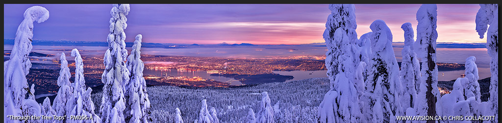 PM056-Through-The-Tree-Tops-Vancouver-Cypress-Holyburn-Peak-Chris-Collacott-Photography-Panoramic copy