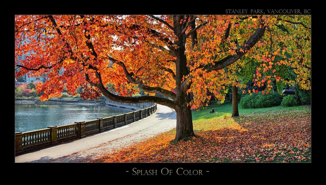 Splash of Color - 2220