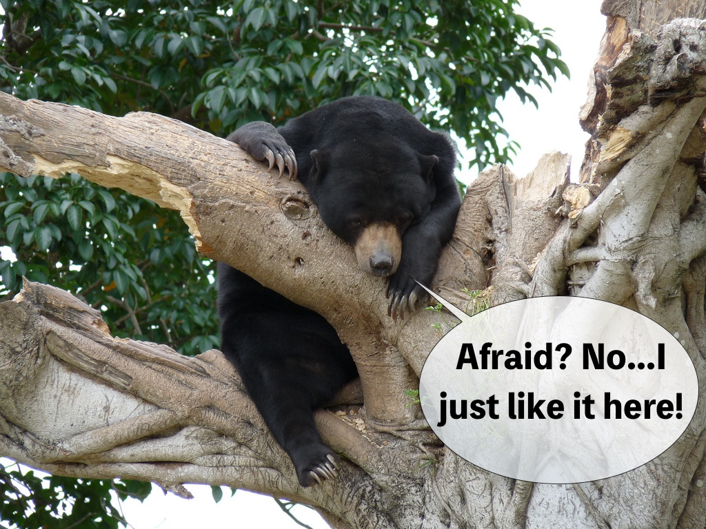 Image of a bear in a tree with text that says