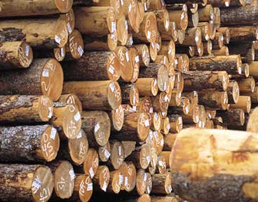 Dry Standing Timber