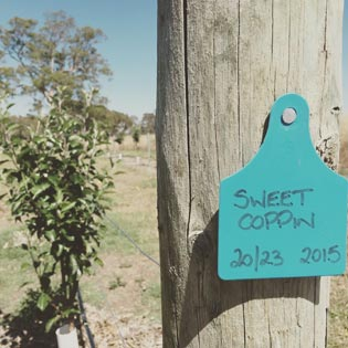 The Cide Project Kalangadoo, South Australia Apples
