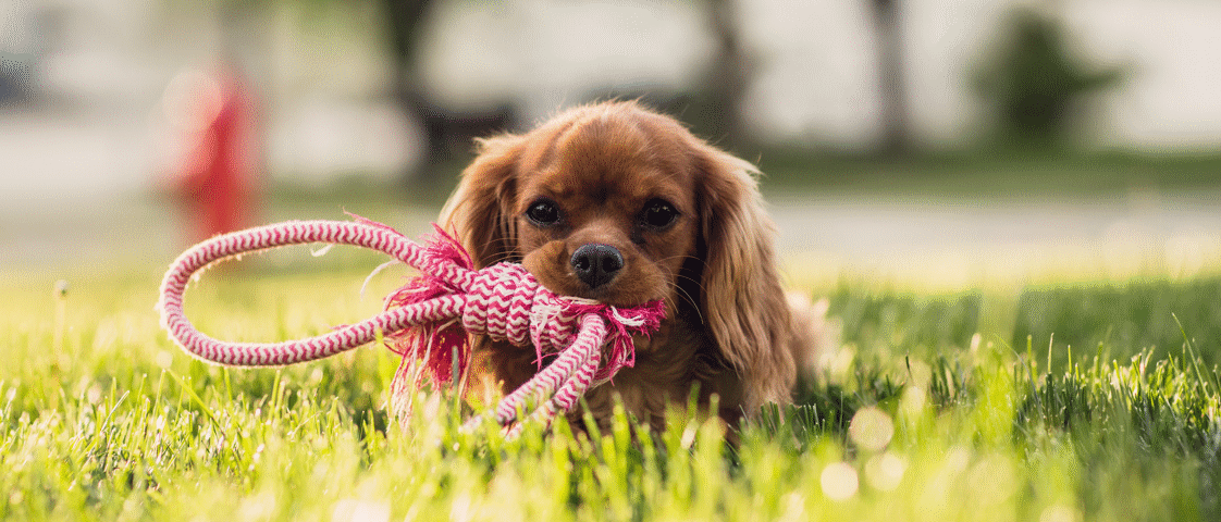 Rusty Ready for Dog Walk