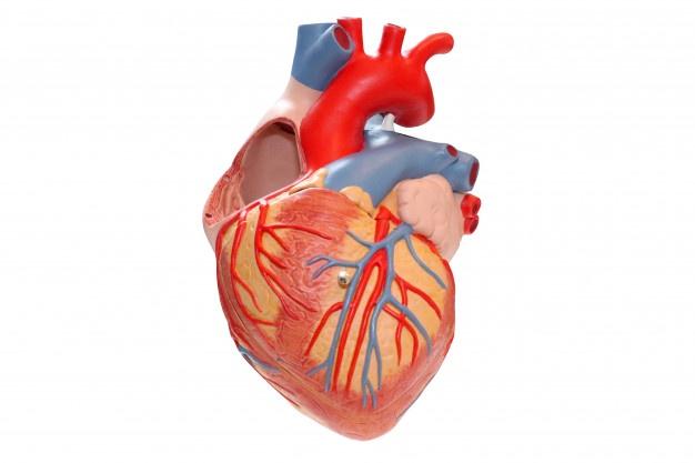 CVS Physiology Part 2