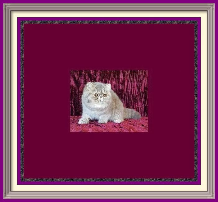 list of cat breeds, list of cat breeders, cat breeder locator, breeders list, list, listing Groomer's Goop, degrease a cat, Goop by Goop Hand Cleaner, goop, wash cat, cat baths, oily cat coat, dog coat, grooming tips, grooming products, cats, kittens, for sale, cat, cats, catteries, kitten, kittens, pedigreed, pedigree, purebred, purebread, adoption, pet products, dog, cat grooming products, toys, Persian, Ragdoll, Siamese, Tonkinese, Maine Coon, Norwegian Forest Cat, Bengal, Birmese, breeders, groomers, pet sitter, find breeder, cattery, cat breeds, cat breeder list, Alabama, Alaska, Arizona, Arkansas, California, Colorado, Connecticut, Delaware, Florida, Georgia, Hawaii, Idaho, Illinois, Indiana, Iowa, Kansas, Kentucky, Louisiana, Maine, Maryland, Massachusetts, Michigan, Minnesota, Mississippi, Missouri, Montana, Nebraska, Nevada, New Hampshire, New Jersey, New Mexico, New York, North Carolina, North Dakota, Ohio, Oklahoma, Oregon, Pennsylvania, Rhode Island, South Carolina, South Dakota, Tennessee, Texas, Utah, Vermont, Virginia, Washington, Washington DC, West Virginia, Wisconsin, Wyoming, PEDIGREED CATS, SHOW CATS, PUREBRED CATS, PUREBREED, PUREBRED, CFA, CFA CATS, CFA REGISTERED CATS, CFA PERSIAN, PEDIGREED KITTENS, PEDIGREED KITTIES, COLORPOINT SHORTHAIRS, CORNISH REX, DEVON REX, REX, EGYPTIAN, EXOTIC SHORTHAIRS, EXOTIC SH, HAVANA BROWNS, HAVANAS,HIMALAYANS, HIMILAYANS, HIMILAYANS, HIMILAYANS, JAPANESE BOBTAILS, KORATS, LAPERMS, LAPERMS, LAPERM, MAIN COON, MAINE COONS, Main Coones, MAIN COONS, COON CAT, COON CATS, CYMRICS, MUNCHKINS, NORWEGIAN FOREST CATS, WEGIES, OCICATS, ORIENTAL LONGHAIRS, ORIENTAL SHORTHAIRS, PERSIANS, KASHMIRS, PIXIE BOBS, PIXIEBOBS, RAGAMUFFINS, RAGDOLLS, RAG DOLLS, RUSSIAN BLUES,TRADITIONAL SIAMESE, APPLEHEAD SIAMESE, OLD-FASHIONED SIAMESE, SIBERIANS, SINGAPURAS, SNOWSHOES, SPHYNX, SACRED CAT OF BURMA, TONKINESE, TONKS, TURKISH TURKISH ANGORAS, TURKISH VANS, CHOCOLATES