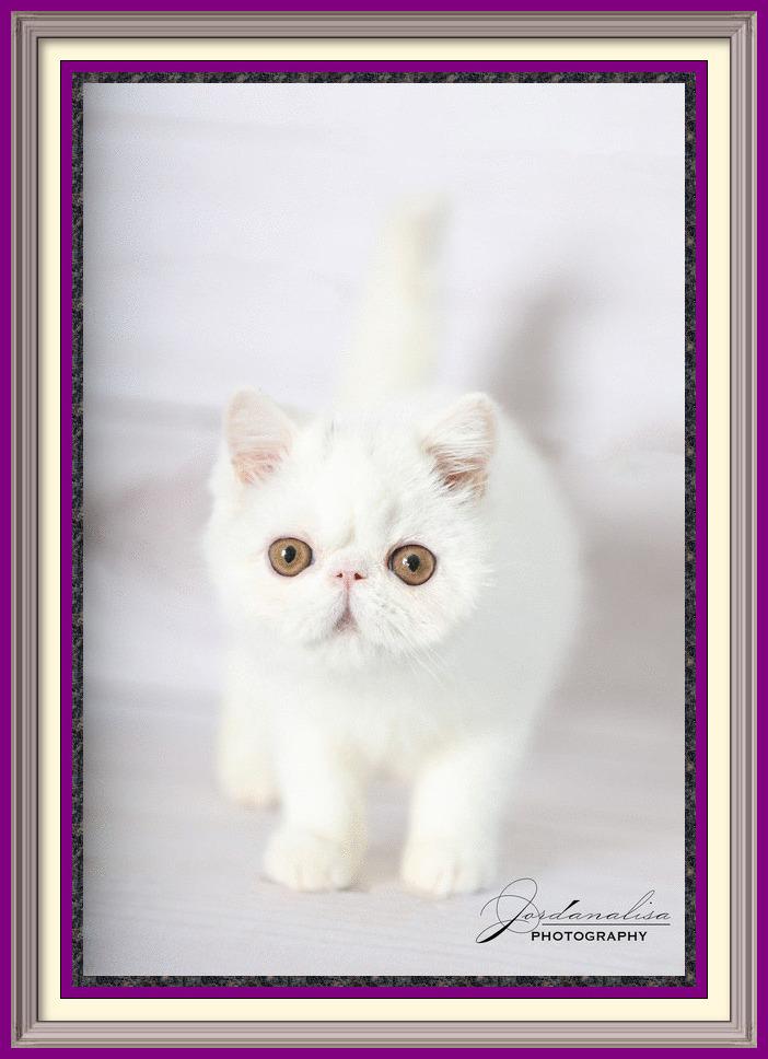 White kitten crissy x taitt05-2020-framed