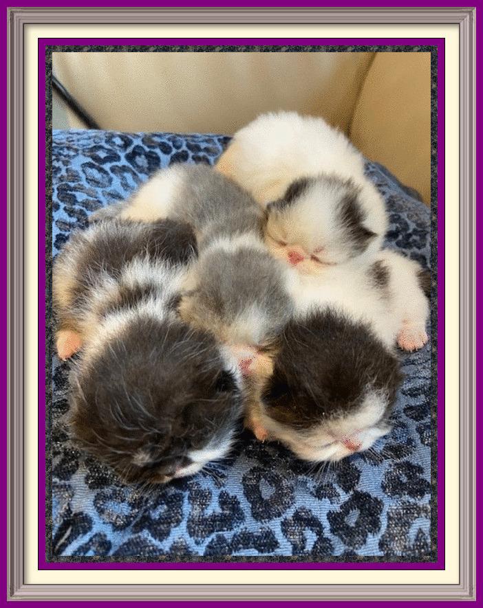 New Kittens Have Arrived - framed