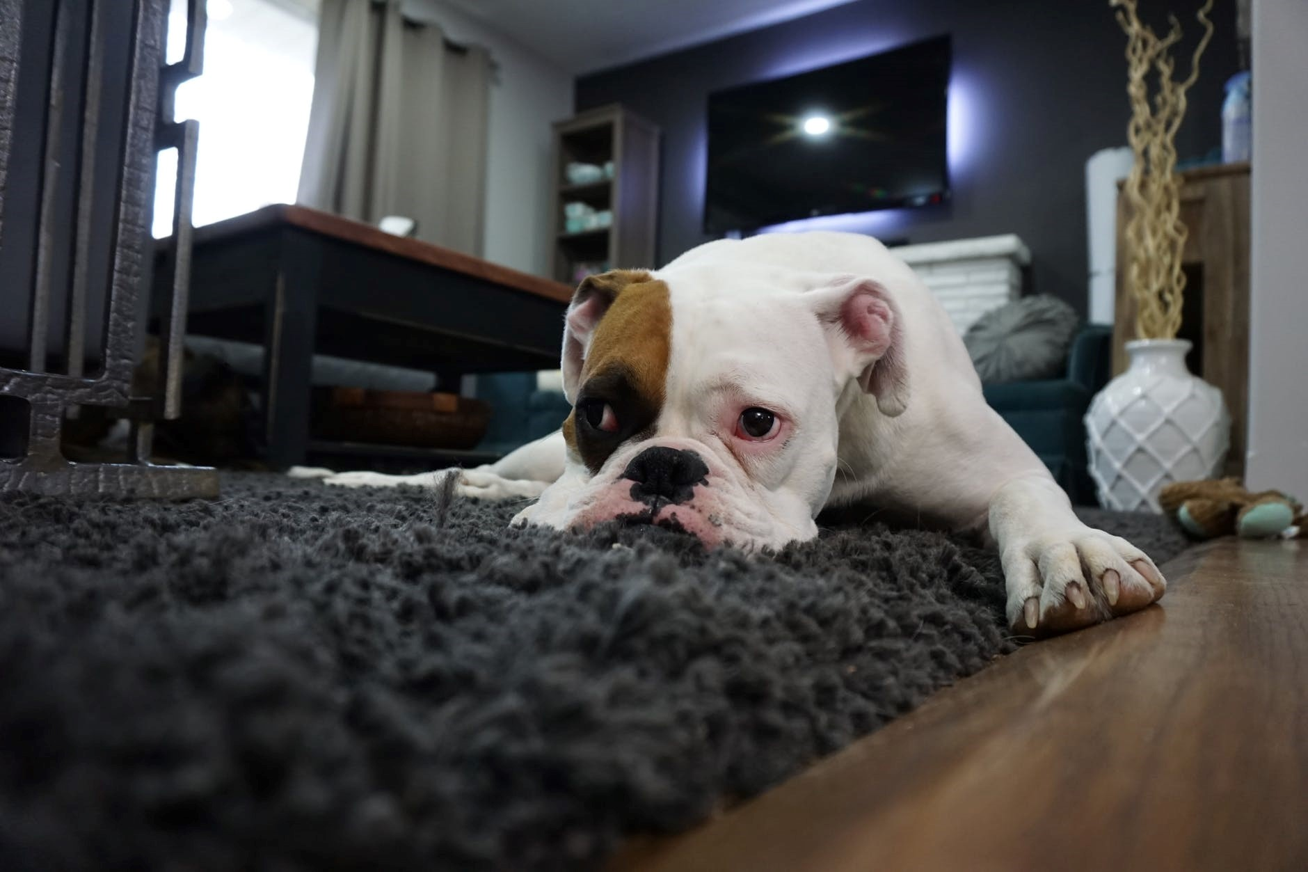 How To Keep Your Floors And Furniture Clean With Pets