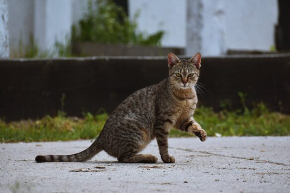 Emergency services warns residents of feeding stray cats