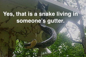 Snake Living In House Gutter | LA Residential Property