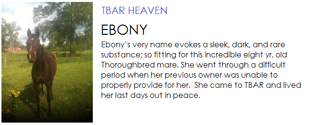 Ebony was a Thoroughbred mare, 8 years old, and lived out her last days in peace at TBAR