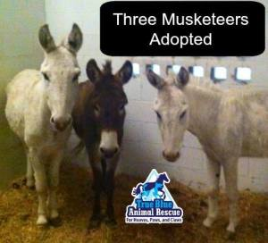 3Musketeers_TBAR_Success