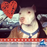 True Blue Animal Rescue Tommy Boy Protect Them From Heartworms