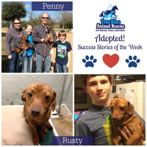 True-Blue-Animal-Rescue-Texas-Success-Stories-Rusty-Penny