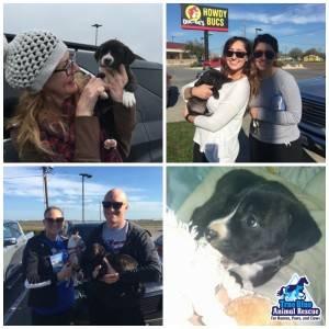 True-Blue-Animal-Rescue-Success-Puppies-Adopted-March-2015