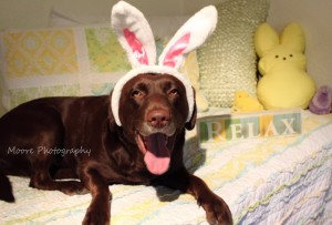 True-Blue-Animal-Rescue-2015-Happy-Easter