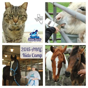 True-Blue-Animal-Rescue_2014_Kids-Camp-Alton