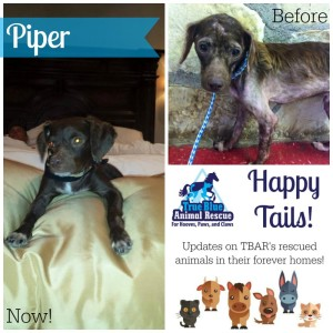 TBAR-Texas-Happy-Tails-Piper