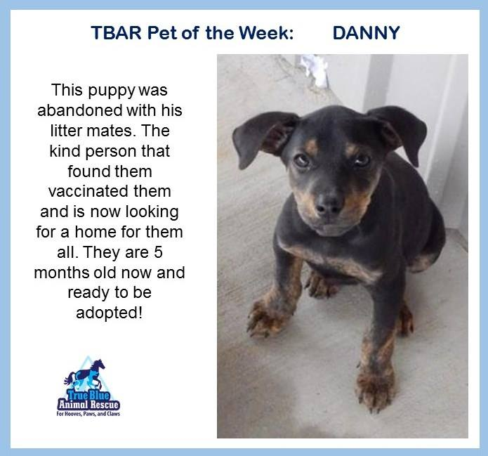TBAR-Pet-of-the-week-Danny