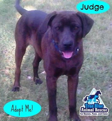 TBAR-Pet-of-the-week-Judge