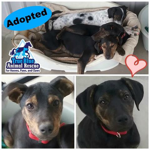 TBAR-Adopted-Dogs-Coco-Danny
