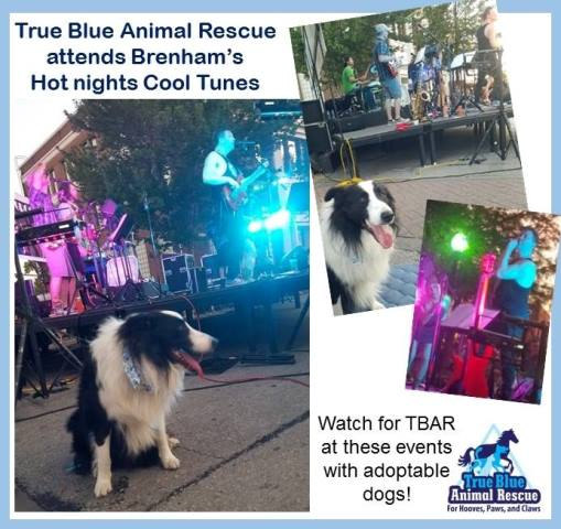 TBAR-Hot-Nights-Cool-Tunes-Brenham-2016