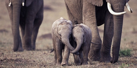 Marfil en Hong Kong atenta contra elefantes a nivel mundial