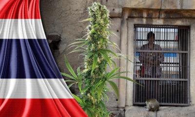 Tailandia, marihuana, legaliza, cannabis, ley, prohibición, medicinal, leyes