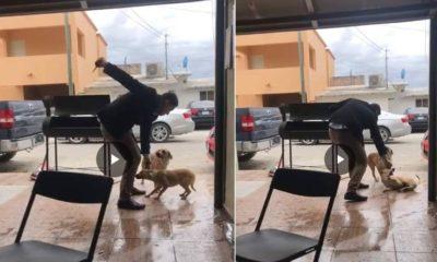 Gerardo Herrera, perro