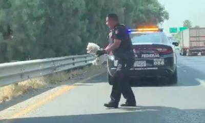 Policía Federal rescata a perrito perdido en carretera