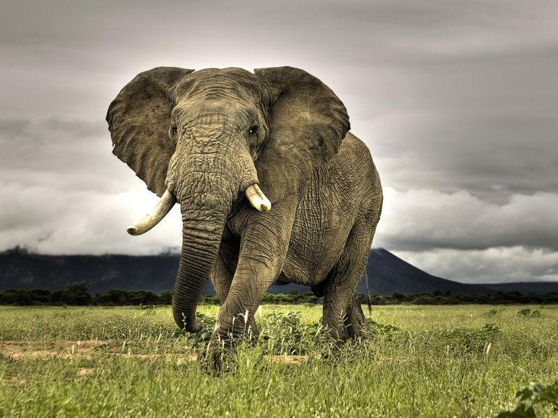 Botswana levanta prohibición a caza de elefantes