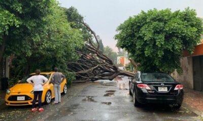 Activan alerta amarilla en Ciudad de México por fuertes vientos