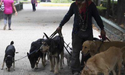 Crece 126% el robo de perros en CDMX desde 2012