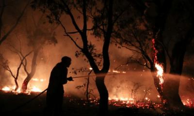 Incendio, Refugio, Animales, Chalco, Manada, San,