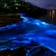 Confinamiento provoca mayor bioluminiscencia en costas mexicanas: UNAM