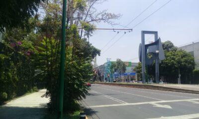 Vecinos de Coyoacán reportan omisión de alcaldía en retiro de arbusto