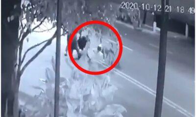 Internauta denuncia ataque de perros en la Gustavo A. Madero