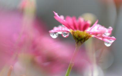 Flora As Remedy