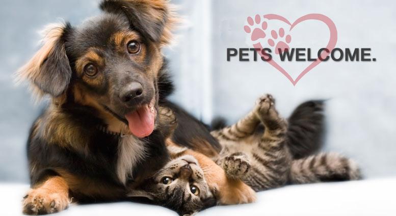 pet-friendly-headeribw