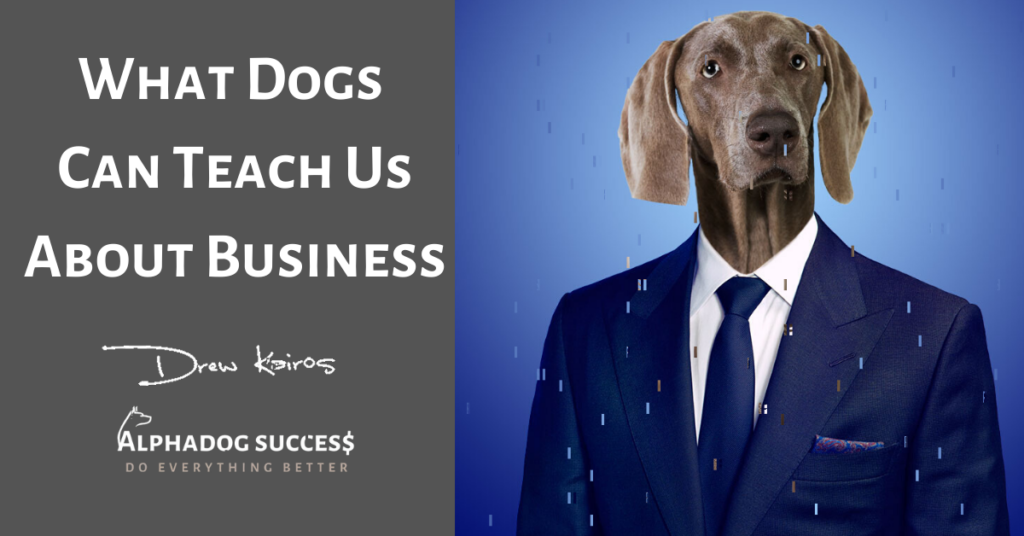 What Dogs Teach Us In Biz