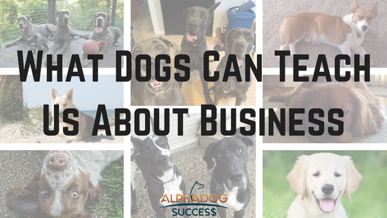 What Dogs Can Teach Us About Business