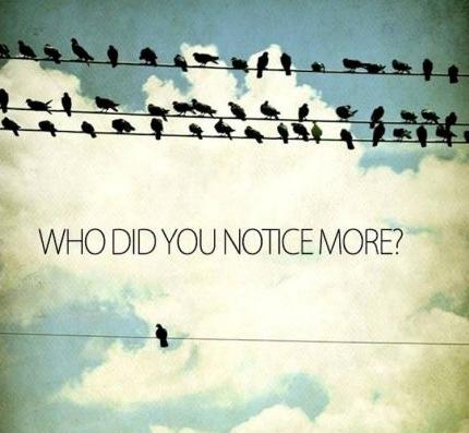 Individuality birds