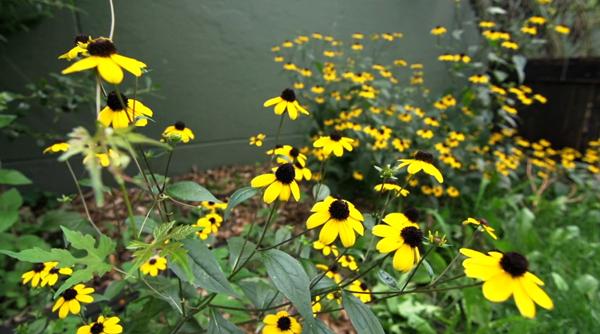 Flowers - Inwood