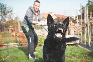 san diego dog attack attorneys