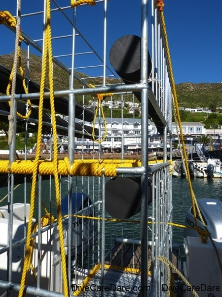 A day with Apex Shark Expeditions and Chris Fallows 41