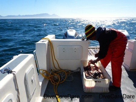 A day with Apex Shark Expeditions and Chris Fallows 48