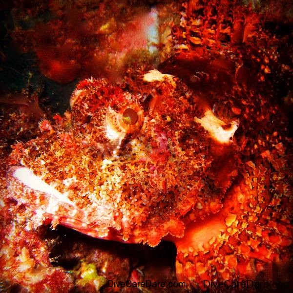 Stonefish - Photographer TonyIsaacson