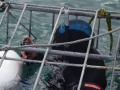 Great White Shark Tours Gansbaai South Africa caged diving  1